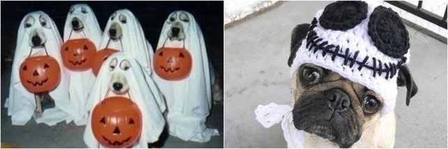 perritos-disfrazados-para-halloween-