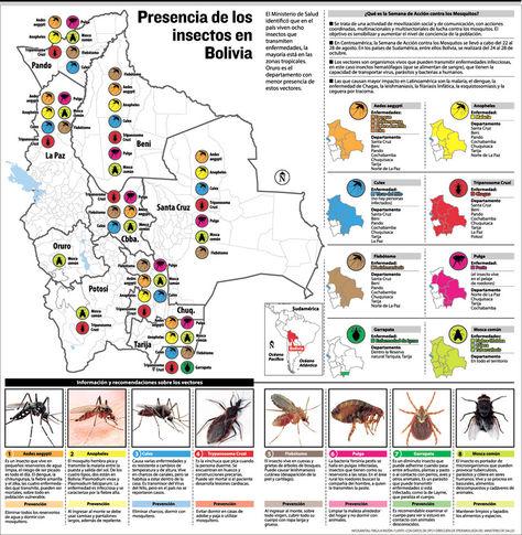 Presencia de los insectos en Bolivia. Infografía: La Razón