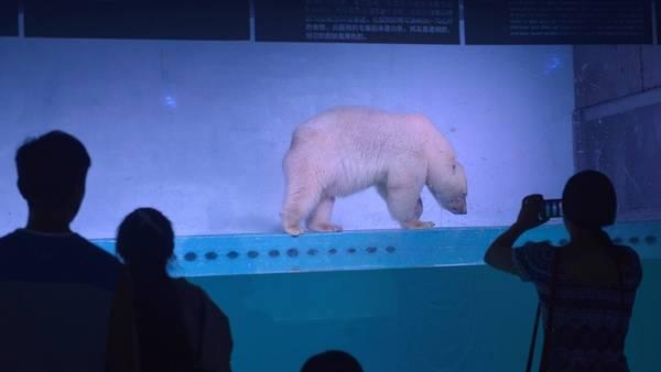 Visitantes sacan fotos al oso polar en el Grandview Mall Aquarium de China (AFP).