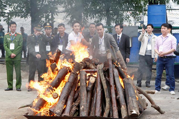 Las autoridades vietnamitas destruyen en Hanói marfil de elefante y cuernos de rinoceronte incautados.