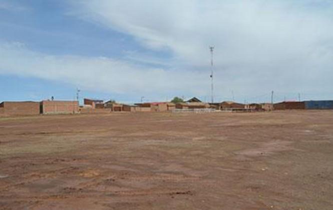 Aguda sequía mata a unas 360 cabezas de ganado en una comunidad de Oruro