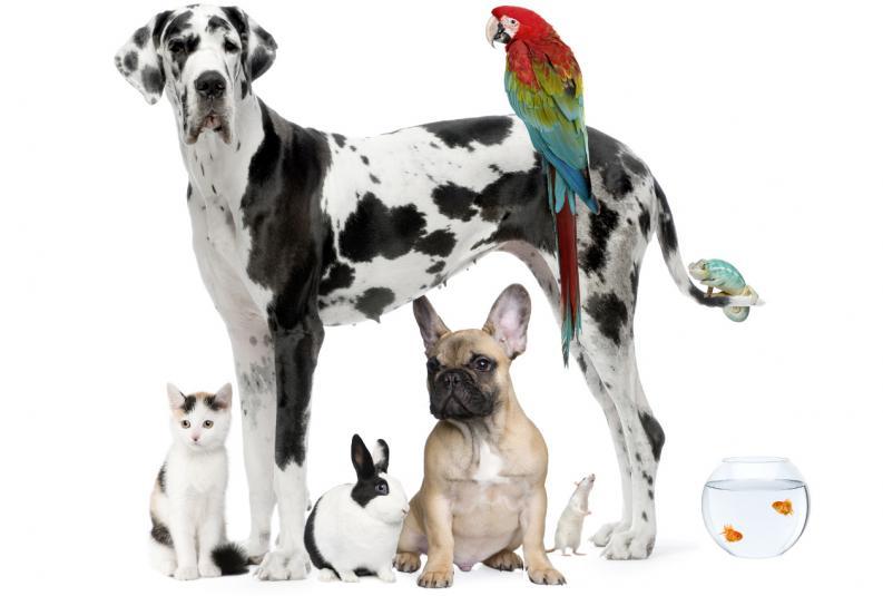 mascotas-en-casa-cual-elegir-segun-el-espacio-1