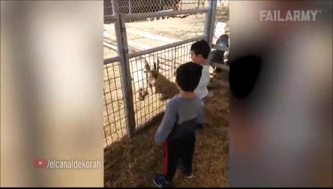 El vídeo de la cabra que te ha llegado por WhatsApp no es exactamente como crees