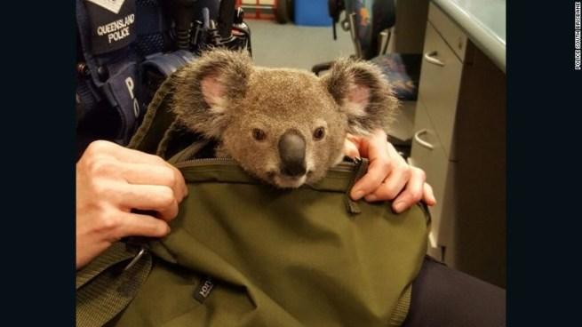 koala-bebe-3