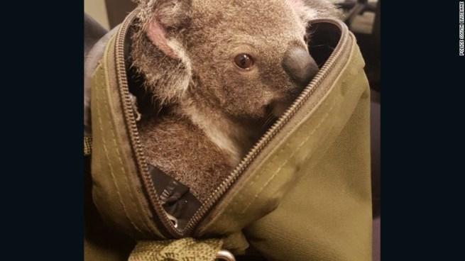 koala-bebe-4
