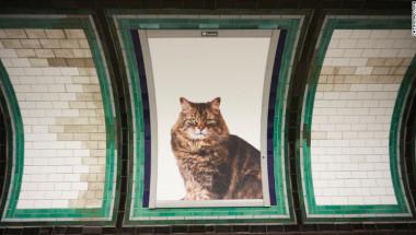 160913155000-cat-pic-3-exlarge-169