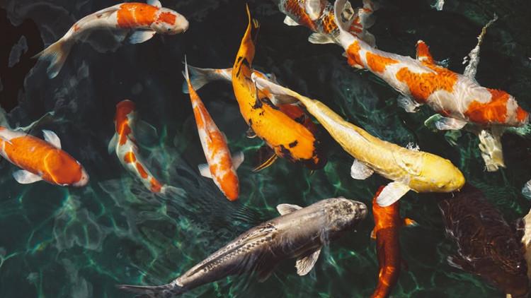 Unos peces congelados en pleno salto desconciertan a los científicos (Foto impresionante)