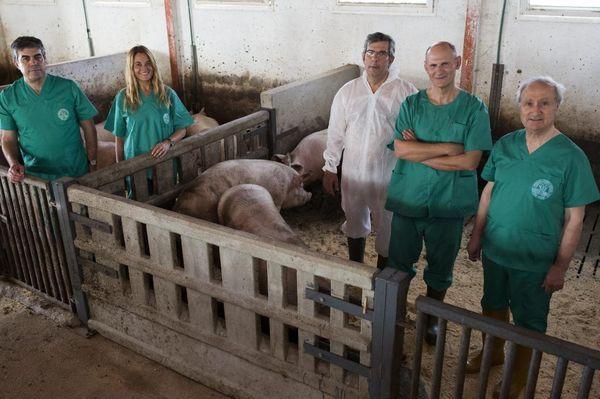 Parte del equipo del científico Juan Carlos Izpisúa que desarrolla tejidos y órganos humanos en embriones de cerdos.