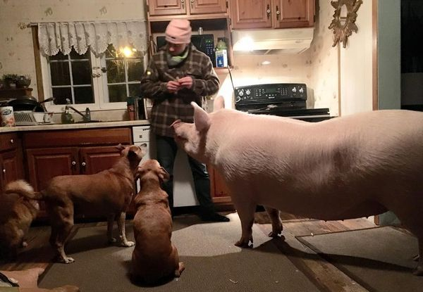 Todas las mascotas de la familia se alistan para recibir la cena: 2 gatos, 2 perros y Esther