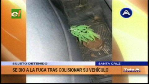 Ebrio que chocó a tres vehículos tenía una planta de marihuana al ser detenido