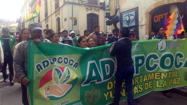 Gobierno cede y Diputados aprueba legalizar 22.000 ha de cultivos de coca