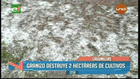 Lagunillas en emergencia: lluvia y granizo destruyeron cultivos