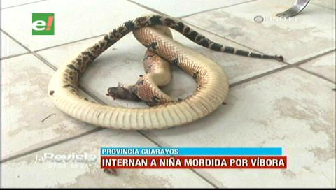 Santa Cruz: Víbora muerde a una niña en colonia menonita