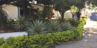En alquiler: excelente ubicación sobre la avenida Irala esquina Potosí