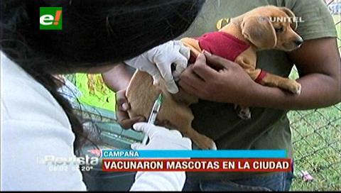 Califican de exitosa campaña de vacunación contra la rabia