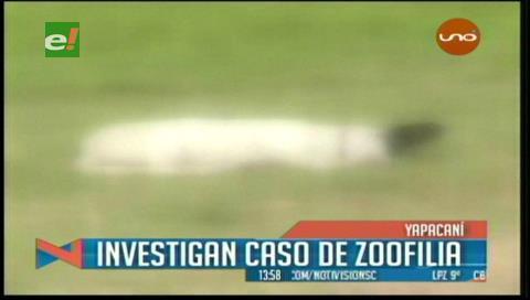 Sujeto es denunciado por zoofilia en Yapacaní