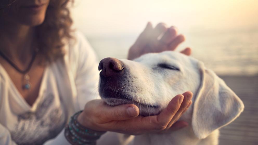 Los diez gestos con los que tu perro te dice te quiero