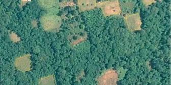 Seis parques nacionales de Bolivia están ocupados con cultivos de coca, confirma Unodc