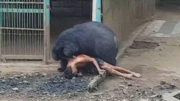 Por burlarse de osos hambrientos, uno casi lo devora