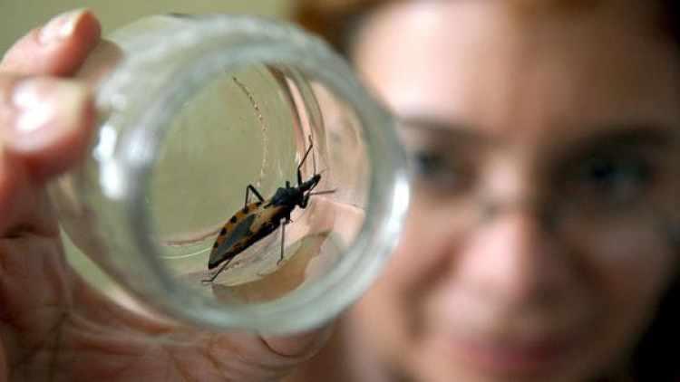 Un medicamento argentino fue el primero en ser aprobado en los Estados Unidos para combatir el Chagas (EFE/David de la Paz)