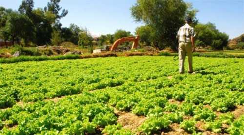 Resultado de imagen de producción en Cochabamba