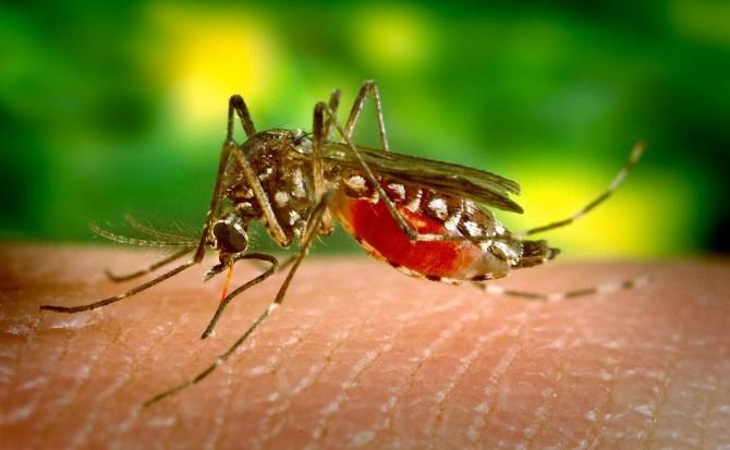 Descubren por qué el virus del Zika se volvió tan peligroso