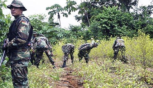 Resultado de imagen de enfrentamientos en tareas de erradicación de coca en La Asunta