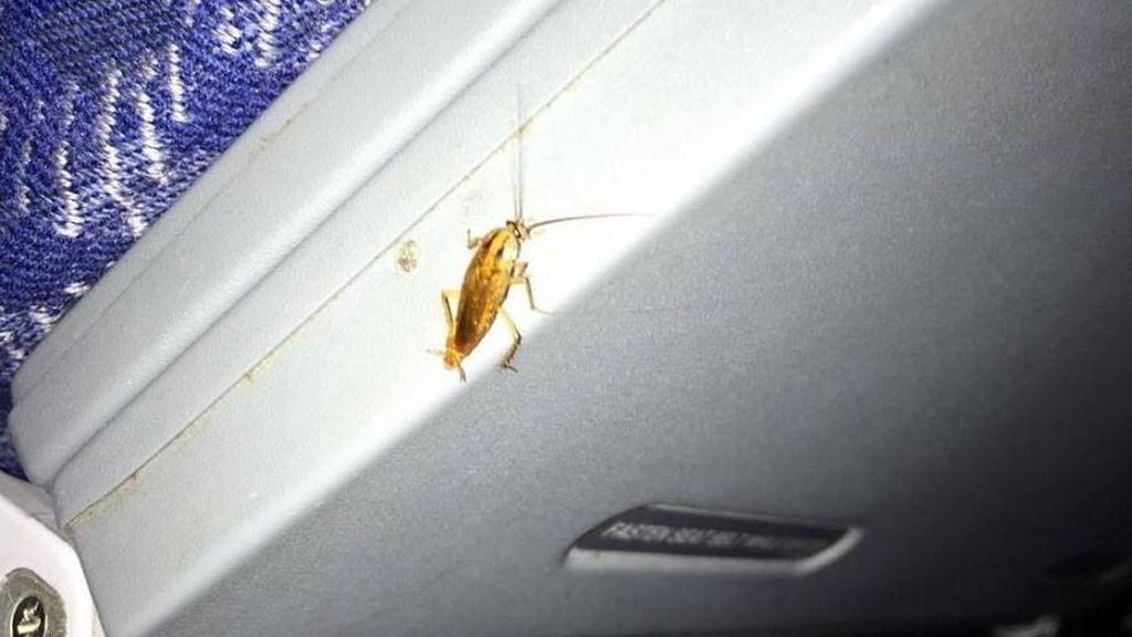 Una cucaracha en el techo de un avión comercial provocó el caos hace unos años.