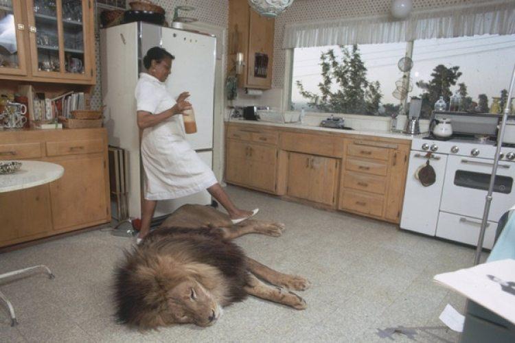La empleada doméstica esquiva a Neil en la cocina.