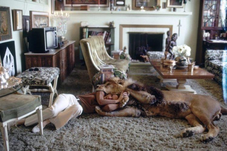 Hedren juega con el león.