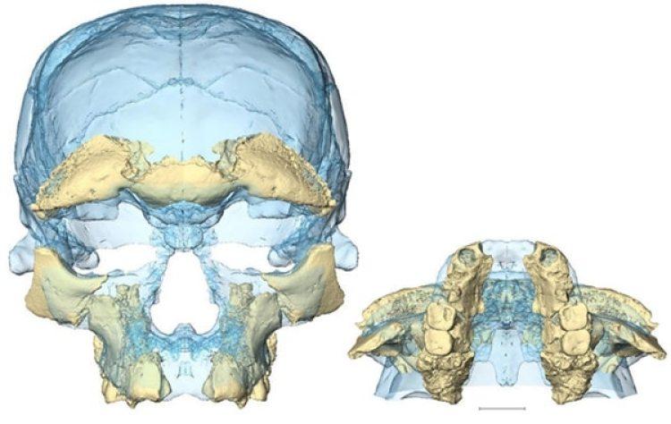 Las piezasque se encontraron en Marruecos permitieron armar el cráneo más antiguo que se conocía de Homo sapiens, pero el de Daliessimilar, se sabe ahora.