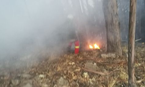 Controlan incendio forestal en Parque Nacional Tunari de Bolivia