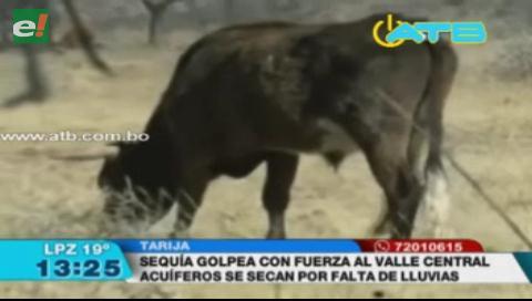 Sequía golpea con fuerza al valle central de Tarija