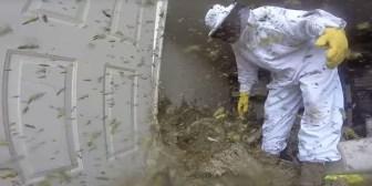 Luisiana: Destruye un nido deavispones del tamaño de una nevera