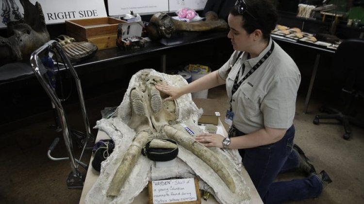 La paleontóloga Ashley Leger exhibe el fósil hallado (AP)