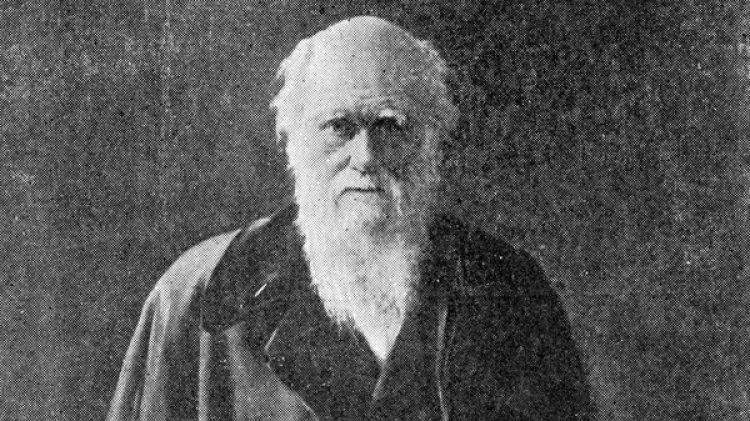 """Científicos estadounidenses encontraron una explicación a una realidad que Charles Darwin catalogó como """"abominable misterio"""" hace casi 150 años sobre las plantas con flores (Getty Images)"""