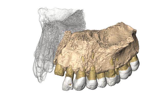 Reconstrucción virtual de la mandíbula hallada en Misliya.