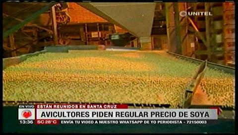 Avicultores piden garantizar el precio de la soya al Gobierno
