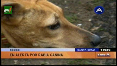 Se incrementan los casos positivos de rabia canina en Santa Cruz
