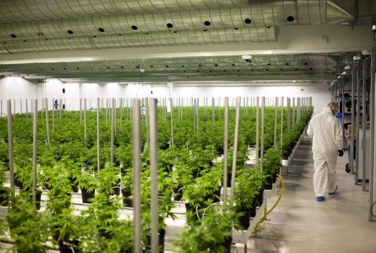 Las instalaciones de Tweed Inc. en Smith Falls, Ontario (Bloomberg / The Washington Post/ James MacDonald)