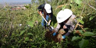 Reforestan la cuenca de Taquiña con 1.300 plantines nativos