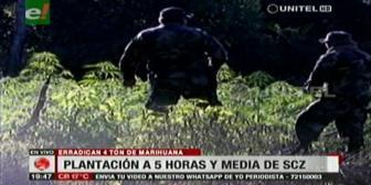 Hallan plantaciones de marihuana cerca de San Ramón
