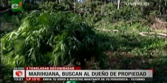 Fiscalía pedirá información a INRA sobre propiedad donde se halló marihuana