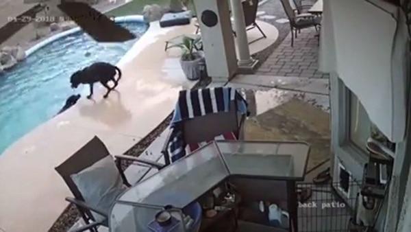 Un perro evitó que su compañero se ahogara — Un gesto heroico