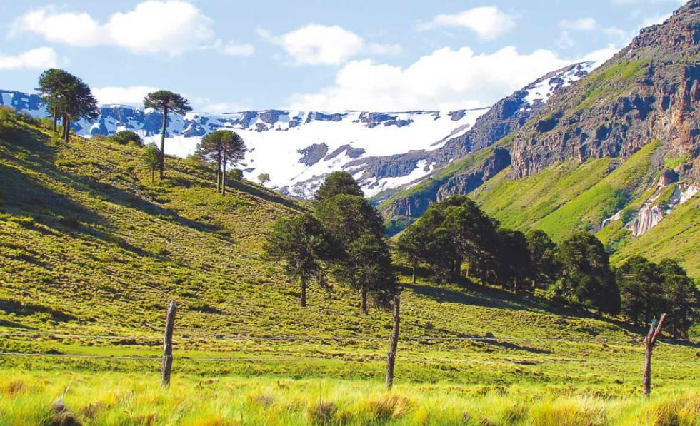 Territorio de la tribu Pehuenche en los Andes chilenos.