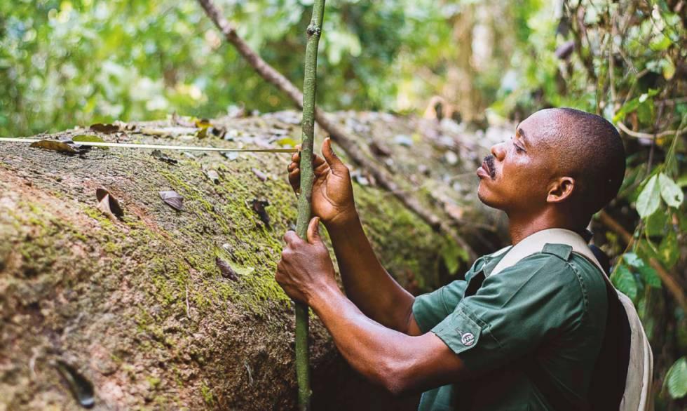 Un funcionario de la Comisión Forestal de Ghana trabaja en el sistema de seguimiento de la madera en Sefwi Wiawso.