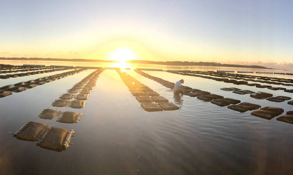 Algunas piscifactorías tiene más impacto ambiental que la producción de carne.