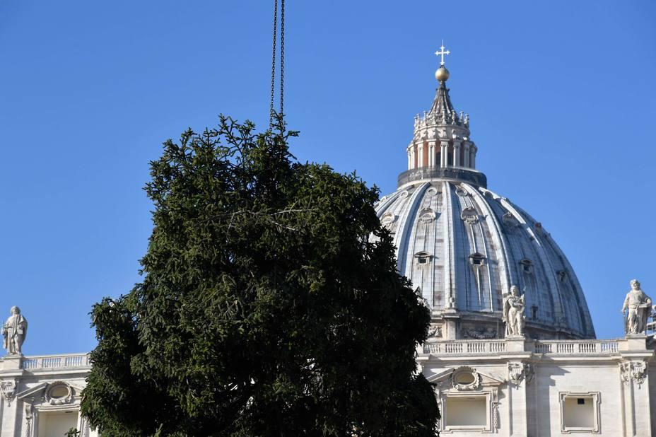 vaticano arbol
