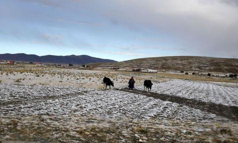 Instantánea de la nevada que cayó en altiplano durante el fin de semana pasado. Foto: Luis Gandarillas