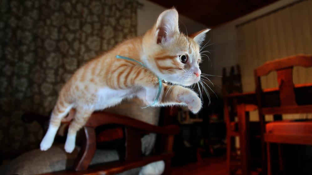 Foto: Gato. (iStock)